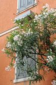 Limone-sul-Garda_008_DxO.jpg