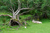 Castle-Ewen-Fairy-Glen_004_DxO.jpg