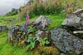 Castle-Ewen-Fairy-Glen_013_1.jpg