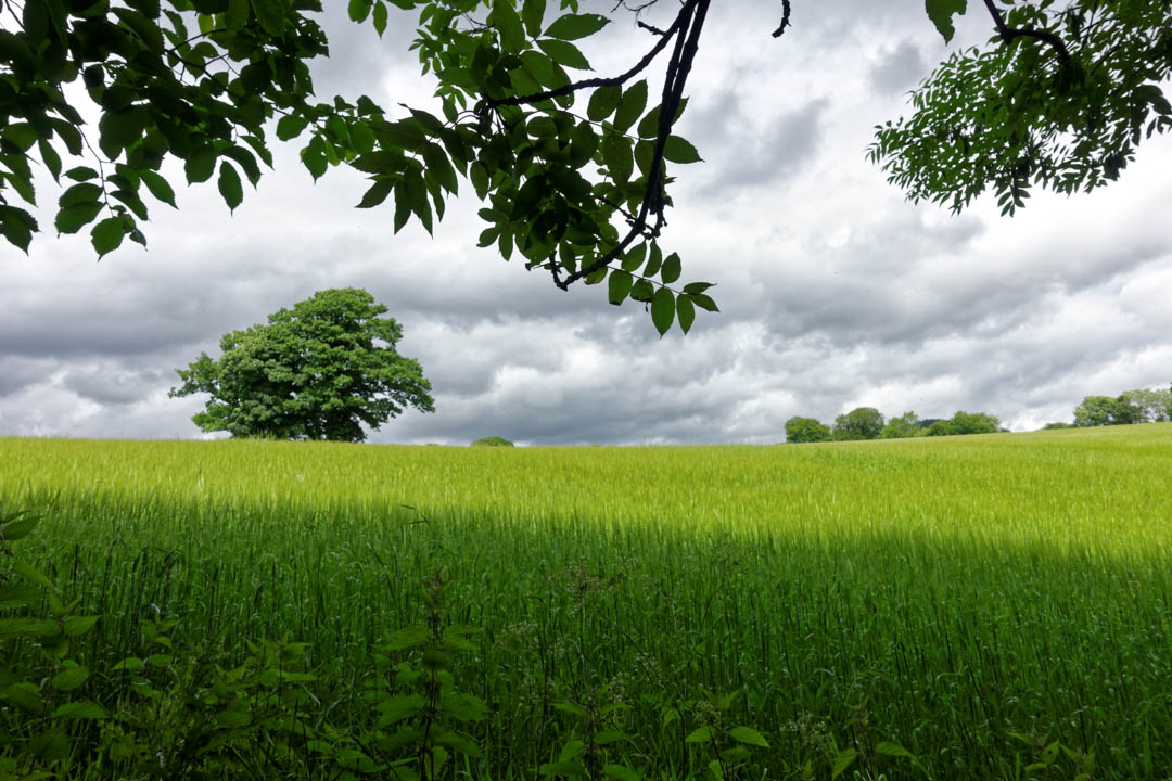 Pitlochry,-Edradour-Path_007_DxO.jpg