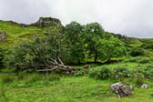 Castle-Ewen-Fairy-Glen_003_DxO.jpg